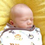 Baby Knut